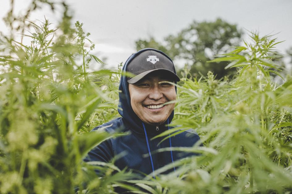 Конопля в степи bbc фильм о марихуане